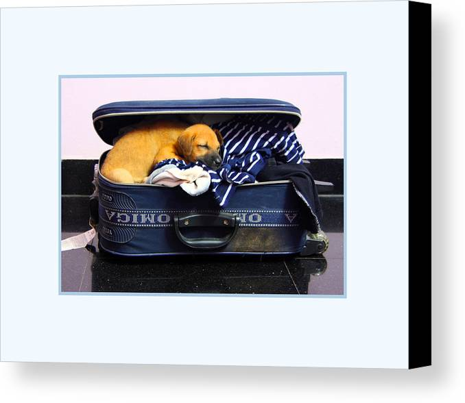 Dog Canvas Print featuring the photograph Ready To Fly by Pradeep Subramanian