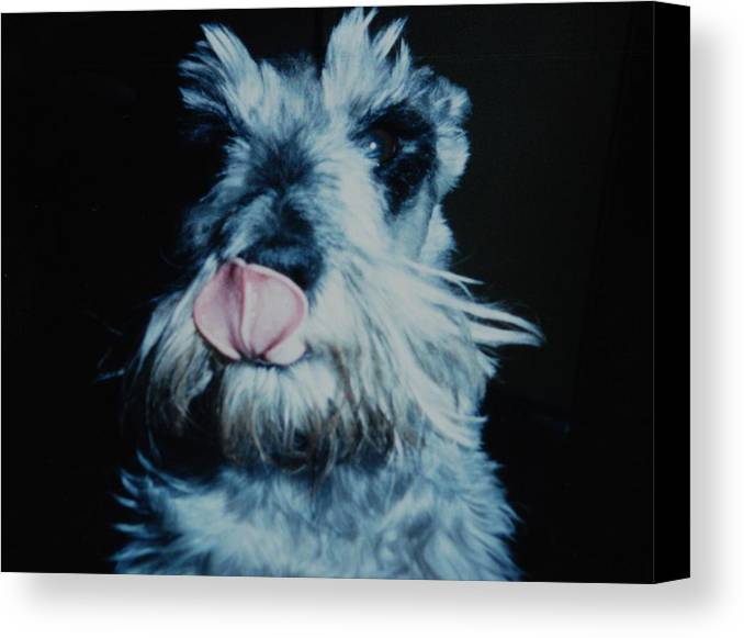 Dogs Canvas Print featuring the photograph Sam The Fat Cow by Rob Hans