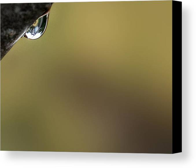 Raindrop Canvas Print featuring the photograph Silent Observation by Marilynne Bull