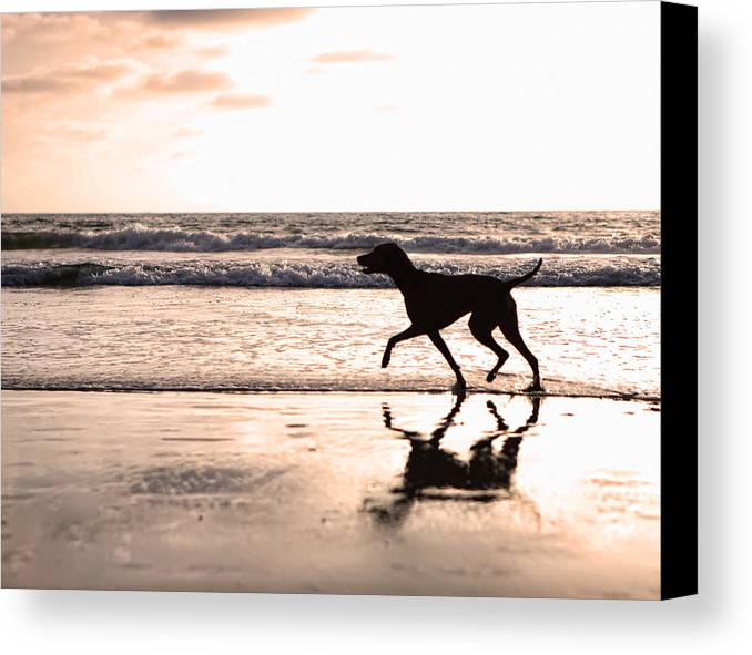 Dog Canvas Print featuring the photograph Silhouette Of Dog On Beach At Sunset by Susan Schmitz