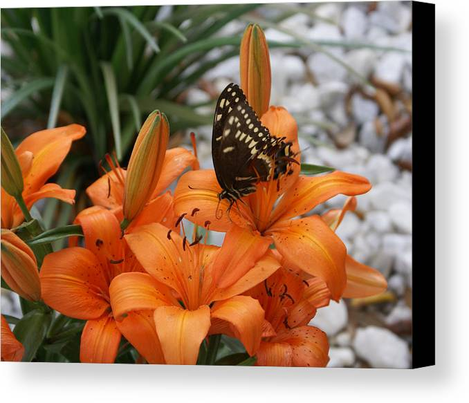 Easter Lilly Canvas Print featuring the painting The Descent by Debbie May