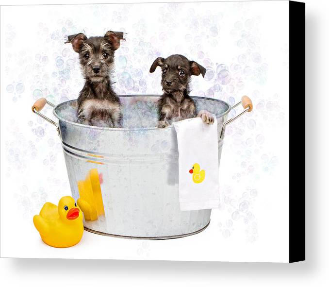 Dog Canvas Print featuring the photograph Two Scruffy Puppies In A Tub by Susan Schmitz
