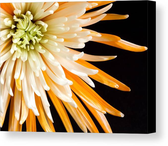 Flower Canvas Print featuring the photograph Yellow Flower On Black by Al Mueller