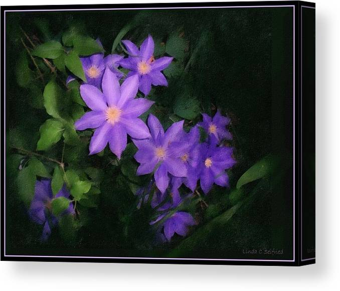 Clematis Canvas Print featuring the mixed media Clematis by Linda Seifried