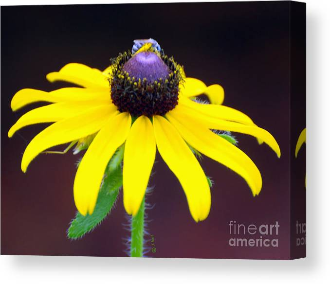 Daisy Canvas Print featuring the photograph Daisy And The Blue Bug by Francine Hall