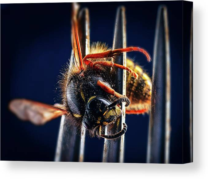 Photography Canvas Print featuring the photograph Dead Wasp On A Fork by Panoramic Images