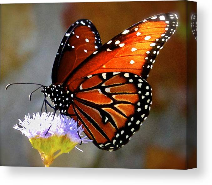 Butterfly Print Canvas Print featuring the photograph Macro Butterfly by Kristina Deane