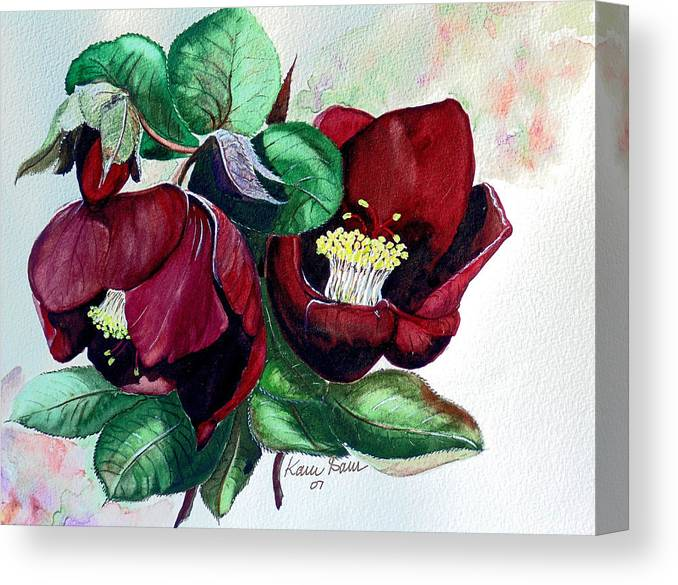 Red Helleborous Painting Flower Painting  Botanical Painting Watercolor Painting Original Painting Floral Painting Flower Painting Red Painting  Greeting Painting Canvas Print featuring the painting Red Helleborous by Karin Dawn Kelshall- Best