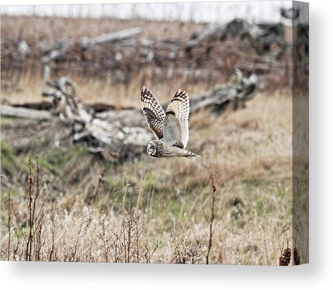 Owl Canvas Print featuring the photograph Short Eared Owl In Flight by Daryl Hanauer