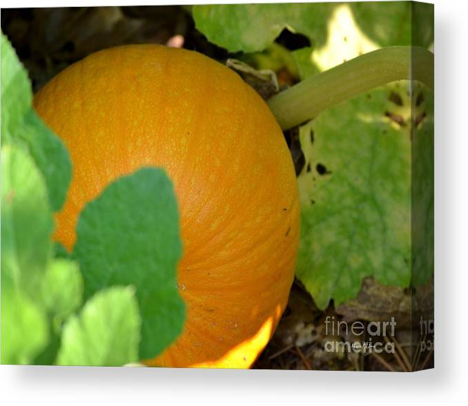 Ripe Canvas Print featuring the photograph Ripe On The Vine by Maria Urso