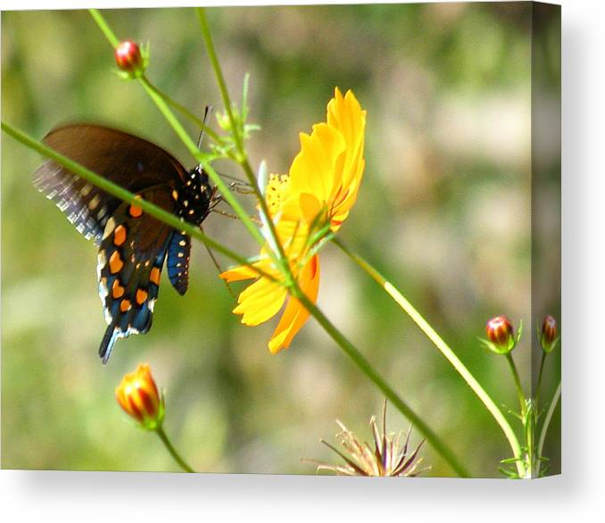 Photography Canvas Print featuring the photograph Busy Busy by Margaret G Calenda