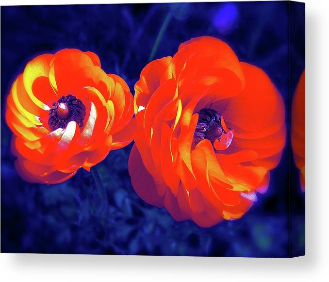 Flowers Canvas Print featuring the photograph Color 12 by Pamela Cooper