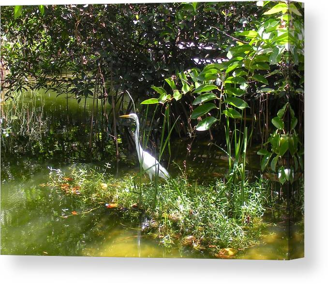 Heron Canvas Print featuring the photograph Floridian Serenity by Maria Bonnier-Perez