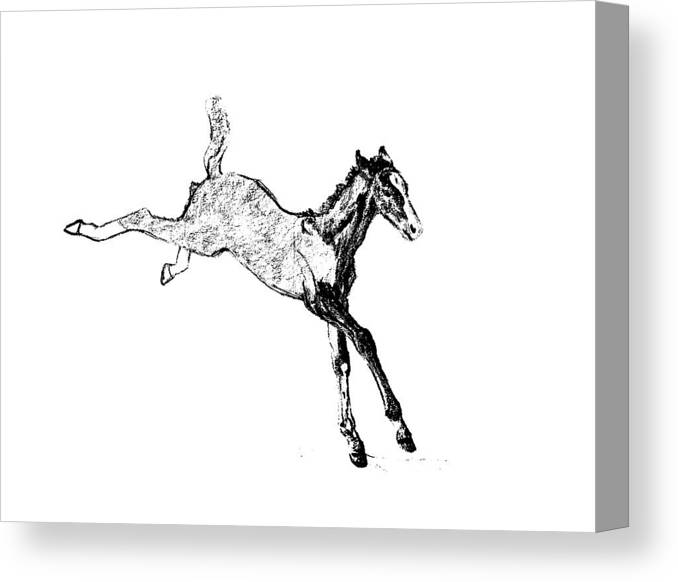 Horse Canvas Print featuring the photograph Leaping Foal by JAMART Photography