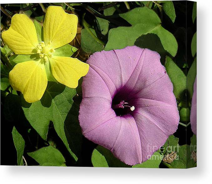 Nature Canvas Print featuring the photograph Nature In The Wild - The Odd Couple by Lucyna A M Green