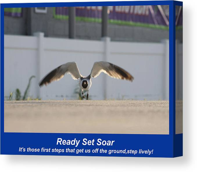 Quotes Canvas Print featuring the photograph Ready Set Soar by Robert Banach