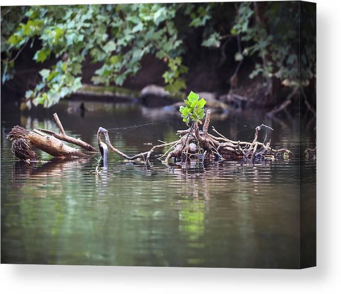 Creek Canvas Print featuring the photograph Roubidox Creek by Hyuntae Kim