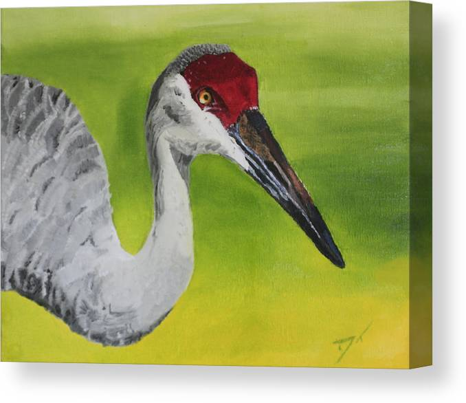 Bird Canvas Print featuring the painting Sandhill Crane by D Turner