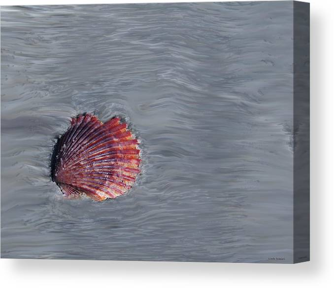 Shells Canvas Print featuring the photograph Shell Imprint by Linda Sannuti