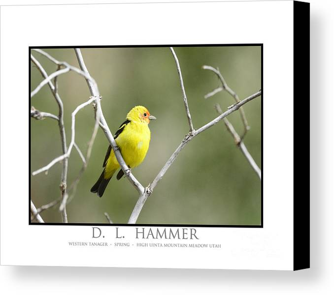 Bird Canvas Print featuring the photograph Western Tanager by Dennis Hammer