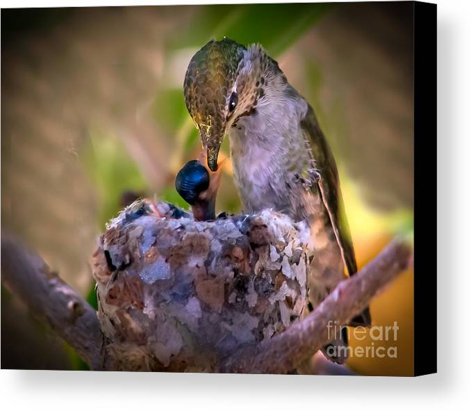 Fedding Canvas Print featuring the photograph Breakfast by Robert Bales