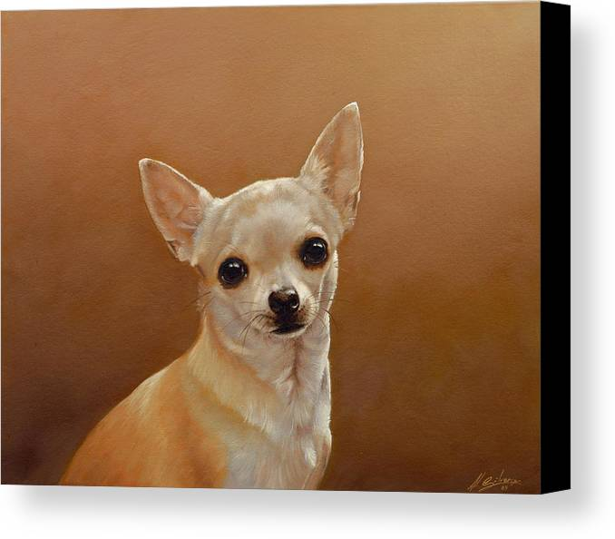 Chihuahua Canvas Print featuring the painting Chihuahua I by John Silver