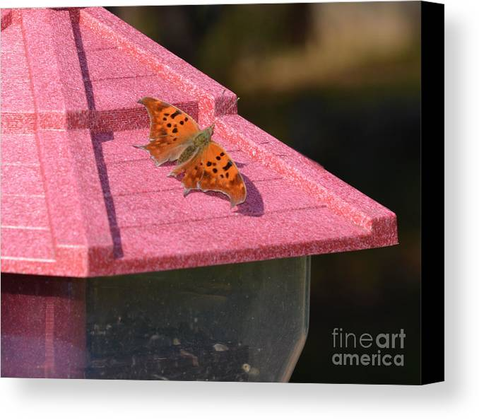 Butterfly Prints Canvas Print featuring the photograph Eastern Comma Butterfly On Bird Feeder by Ruth Housley