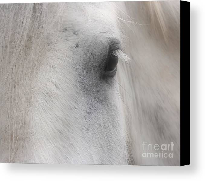 Horse Canvas Print featuring the photograph Eye Of Beauty by Smilin Eyes Treasures
