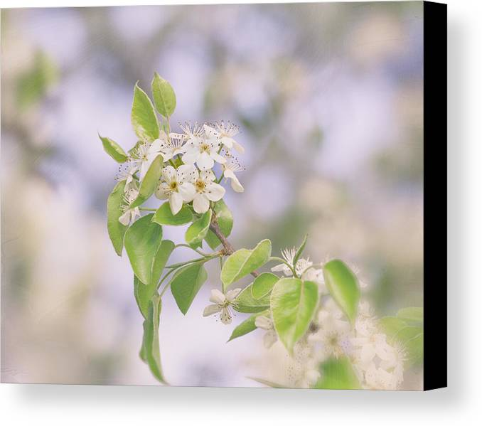 Flower Canvas Print featuring the photograph Fairest In The Land by Kim Hojnacki