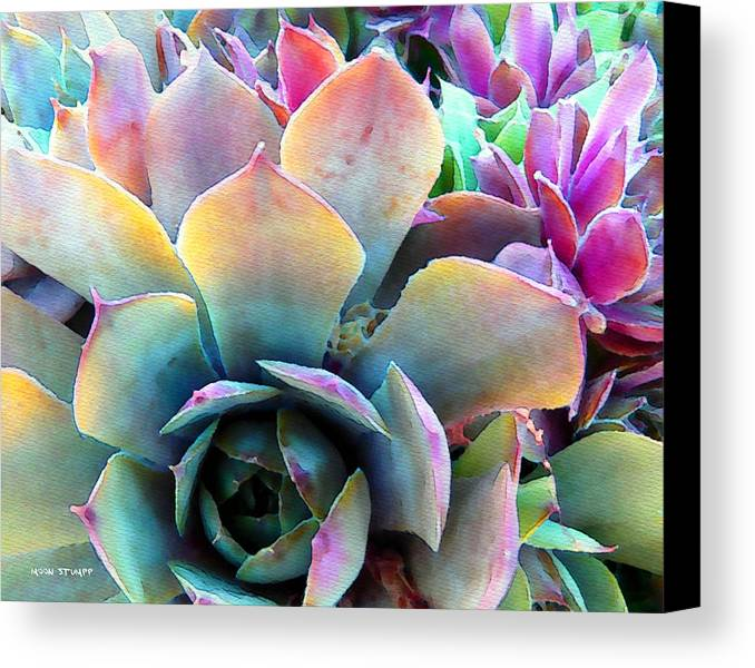Hens And Chicks Photography Canvas Print featuring the painting Hens And Chicks Series - Unfolding by Moon Stumpp