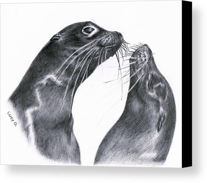 Sea Lion Canvas Print featuring the drawing Lions by Lucy D