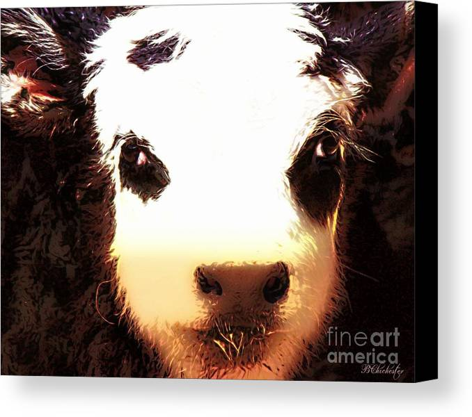 Angus Calf Canvas Print featuring the photograph Little Black Baldy by Barbara Chichester