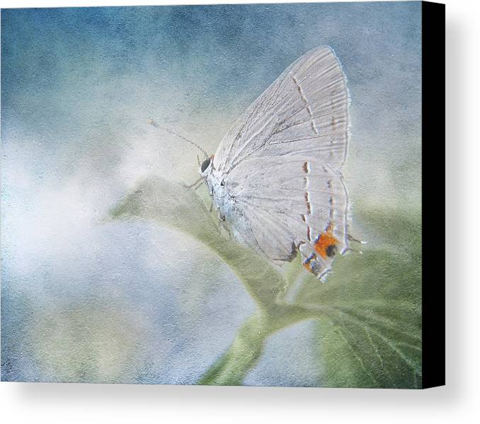 Butterfly Canvas Print featuring the photograph Little Grey Hairstreak by David and Carol Kelly