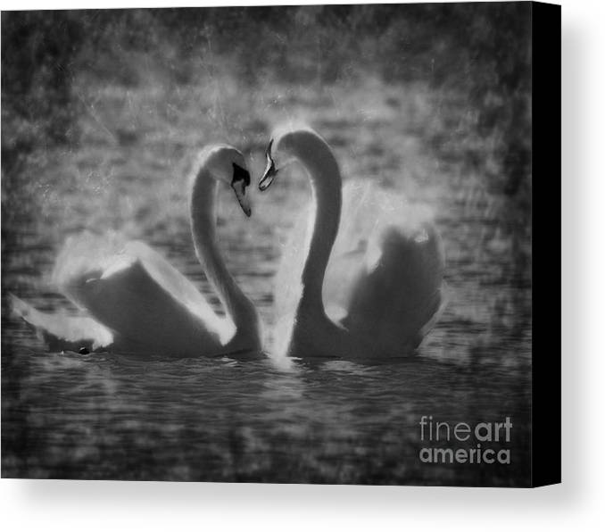 Festblues Canvas Print featuring the photograph Love Is.. by Nina Stavlund