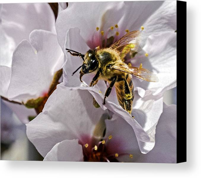 Macro Canvas Print featuring the photograph Macro View by George Davidson