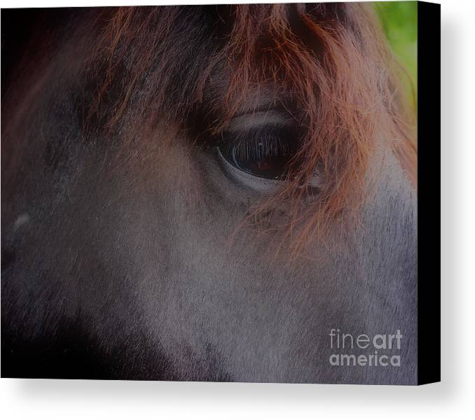 Horse Canvas Print featuring the photograph Private Thoughts by Smilin Eyes Treasures