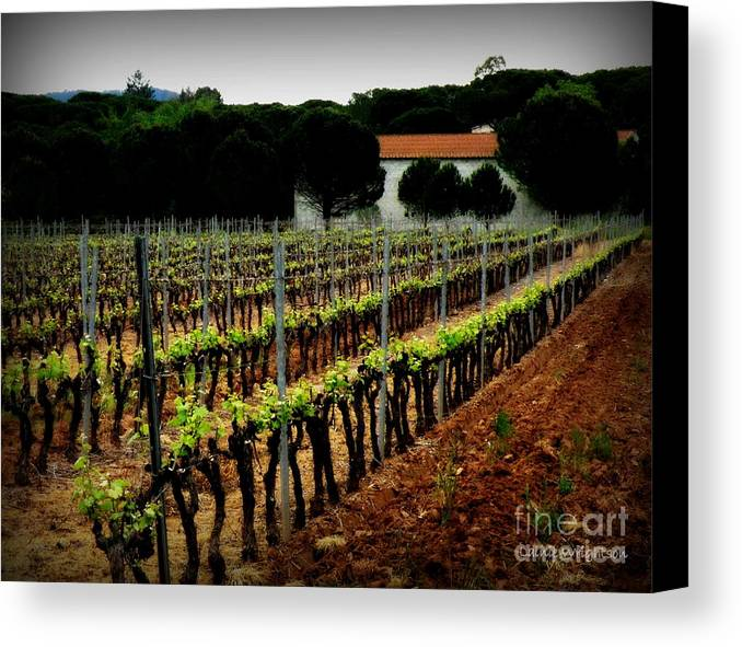 Vineyard Canvas Print featuring the photograph Provence Vineyard by Lainie Wrightson