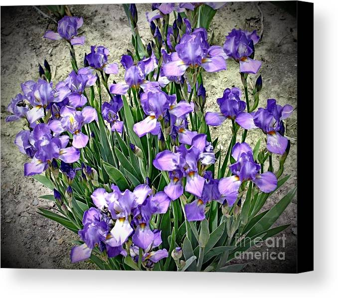 Iris Canvas Print featuring the photograph Purple Irises by The Art of Alice Terrill