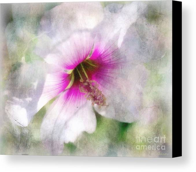Rose Of Sharon Canvas Print featuring the painting Rose Of Sharon by Barbara Chichester