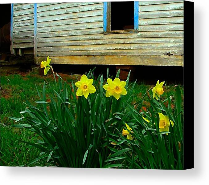 Spring Canvas Print featuring the photograph Spring At The Old Home Place by Julie Dant