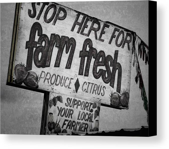 Florida Canvas Print featuring the photograph Stop Here by Joan Carroll