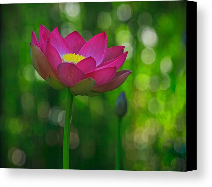 California Canvas Print featuring the photograph Sunlight On Lotus Flower by Beth Sargent