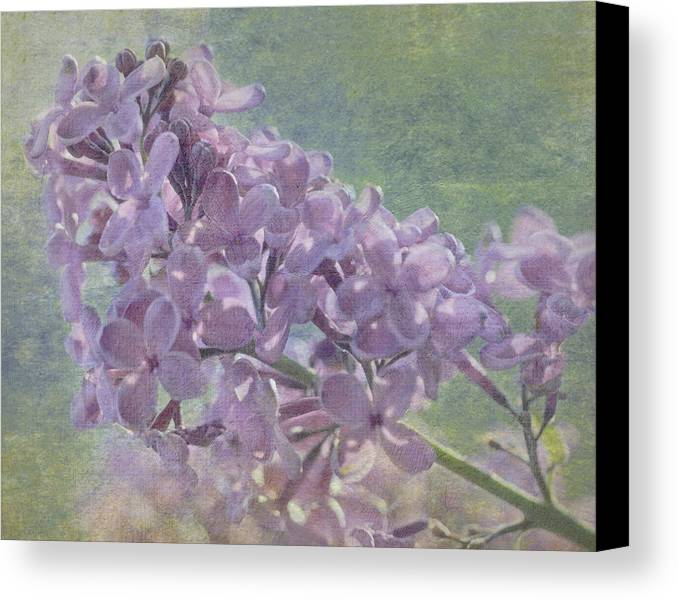Lilac Canvas Print featuring the photograph The Lilac by Cheryl Butler