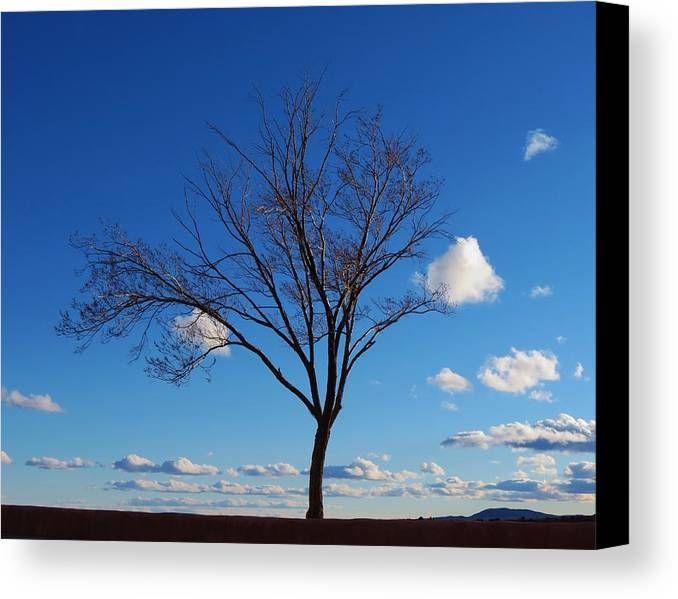 Tree Canvas Print featuring the photograph Waiting For Spring by Feva Fotos