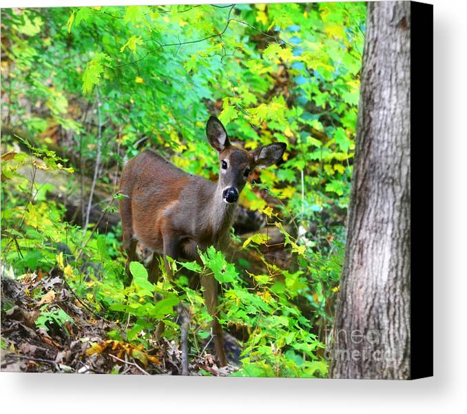 Landscape Canvas Print featuring the photograph Can I Help You My Deer by Peggy Franz