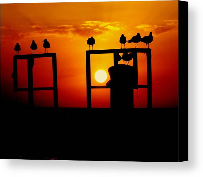 Key West Sunsets Canvas Print featuring the photograph Goodnight Gulls by Karen Wiles