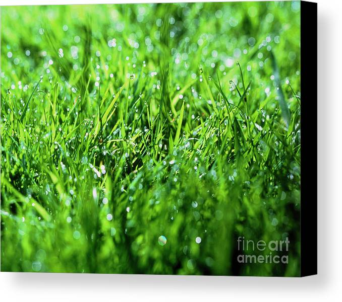 Dewdrop Canvas Print featuring the photograph Grass by Sinclair Stammers