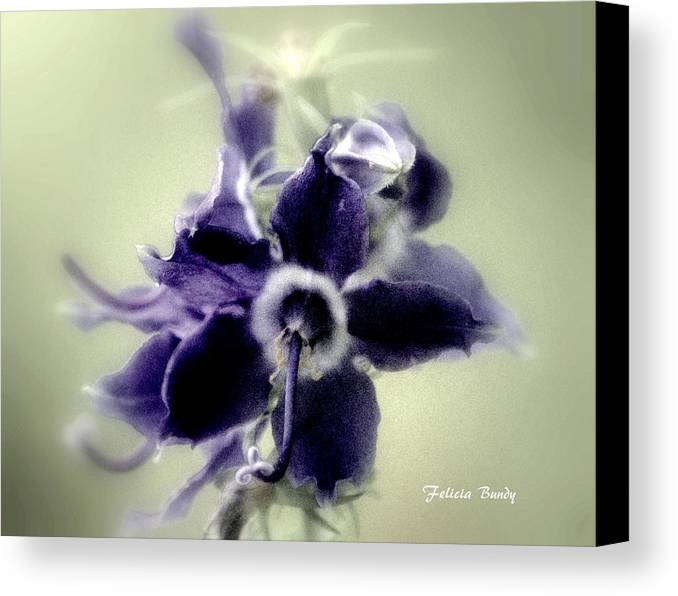 Flower Canvas Print featuring the photograph Purple Majesty by Felicia Bundy