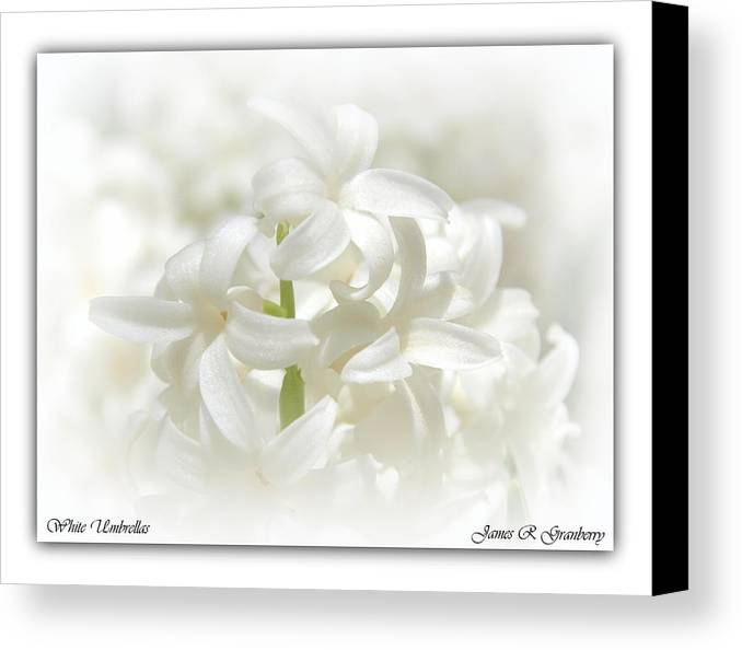 Flower Canvas Print featuring the photograph White Umbrellas by James Granberry