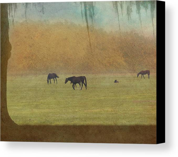 Outside Canvas Print featuring the photograph Autumn Afternoon by Eleszabeth McNeel